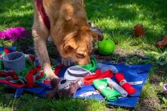 Wzbogacanie psiego środowiska