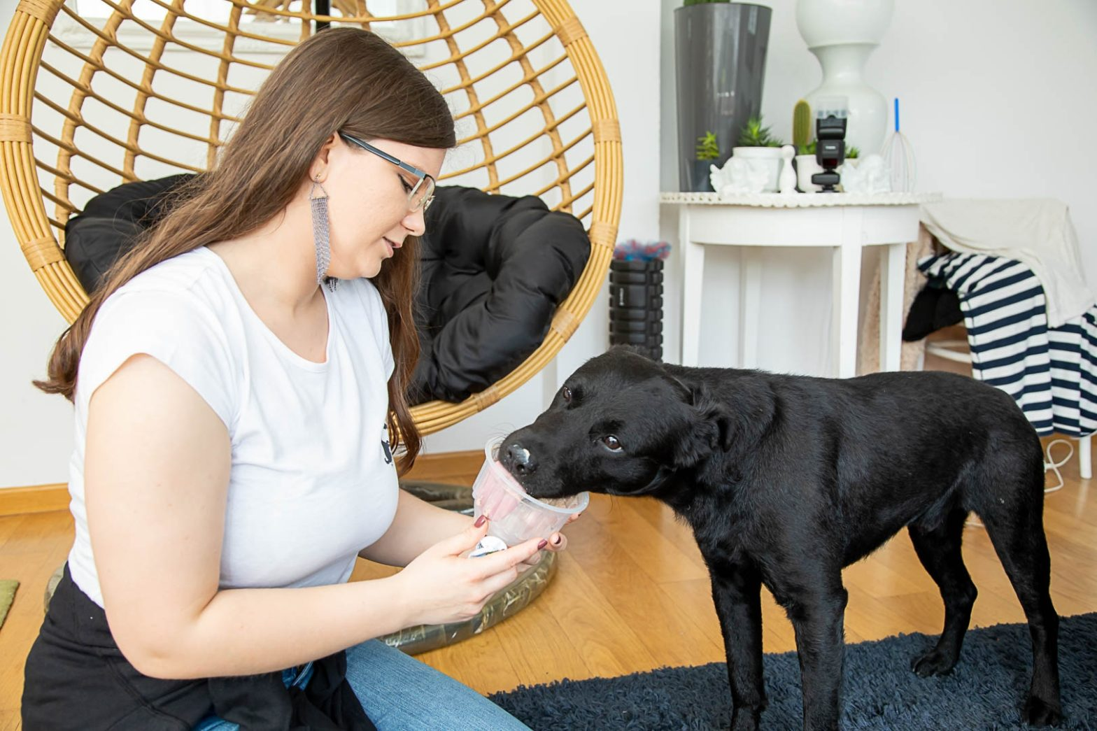Obrazek wyróżniający wpisu Zabawki dla psów z domowych produktów