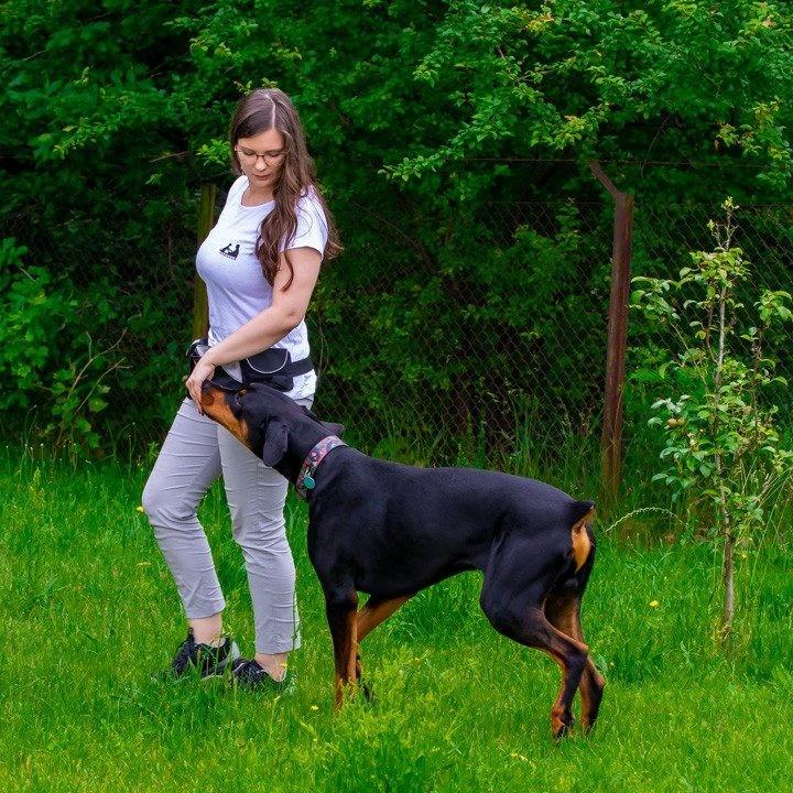 Trening psów - podążanie