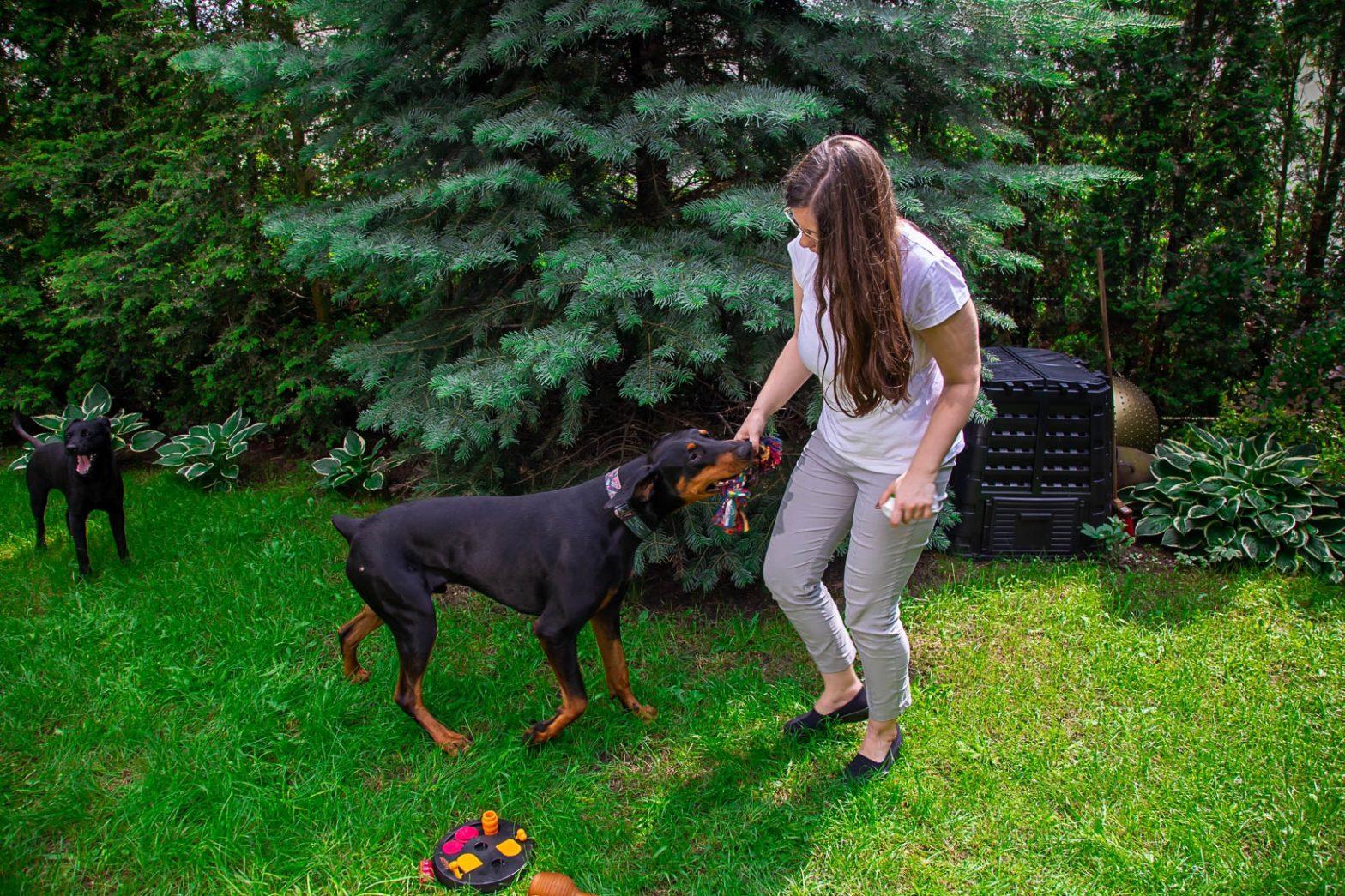 Obrazek wyróżniający wpisu Zabawki do szarpania i przeciągania się z psem